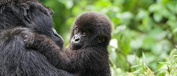 Group to Rwanda