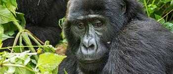 Group to Uganda