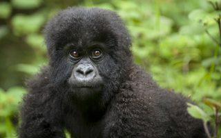 3 Days Uganda Gorilla and Wildlife Safari