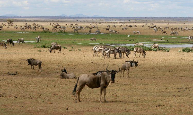 16 Days Grand Kenya Safari