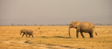 20 Days Best of East Africa Safari