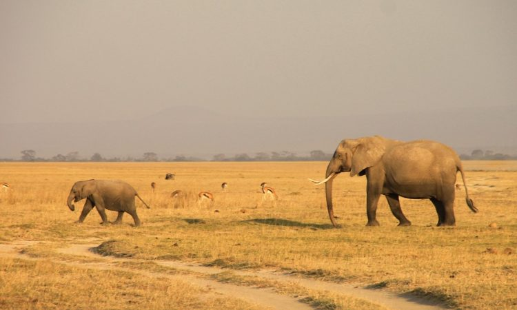 20 Days Best of East Africa Safari