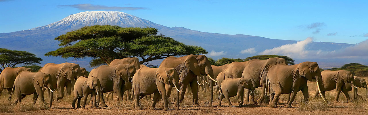 Tanzania Safaris to Kilimanjaro