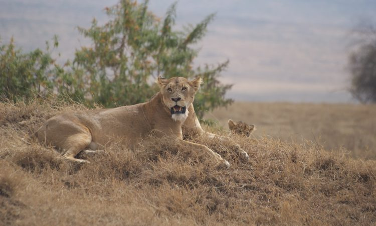 4 Days Ngorongoro Crater Safari