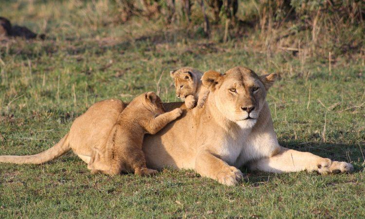 3 Days Masai Mara Flying Safari