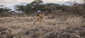 4 Days Serengeti Wildlife Safari