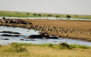 3 Days Best of Tanzania Wildlife