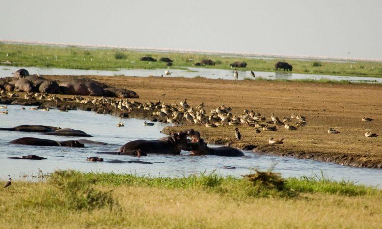 3 Days Best of Tanzania Wildlife