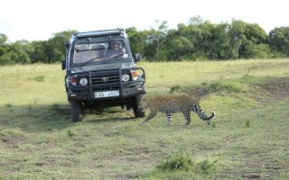 5 Days Amboseli, Naivasha & Masai Mara