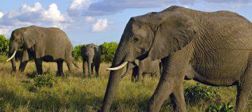6 Days Masai Mara