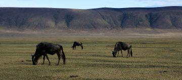 3 Days Serengeti & Ngorongoro