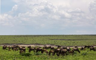 5 Days Tanzania Great Migration Safari