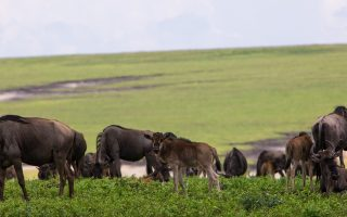 Why visit Ngorongoro Crater