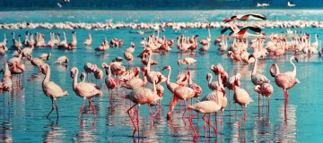 3 Days Lake Nakuru Safari