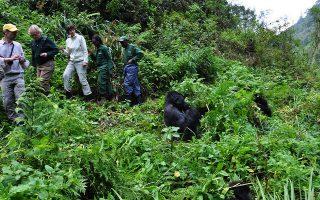 5 day Uganda and Rwanda safari