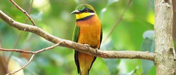 Rwanda Birding Holidays