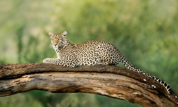 7 Days Best of Tanzania Safari