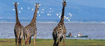 4 Days Serengeti