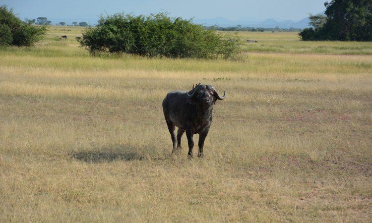 10 Days Best of Kenya Safari