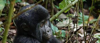 Tailor made trips to Rwanda