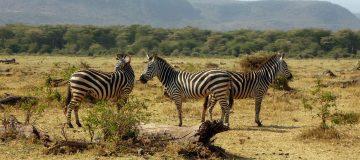 Why Visit Lake Manyara