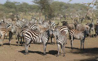 7 Days Best of Kenya Safari Tour