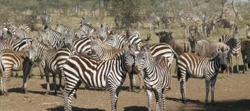 7 Days Best of Kenya Safari Tour