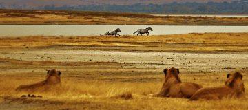8 Days Big 5 Kenya Safari